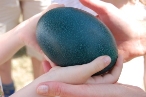 L'œuf d'émeu est absolument splendide, bien plus en vrai que sur la photo!